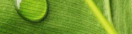 Ambience Jungle Leaf
